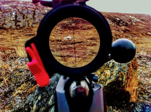 Hunting caribou has become easier using new technologies as well as sharing one game on facebook, as done by Jens Erik from Sisimiut, Greenland. Photo: Jens Erik