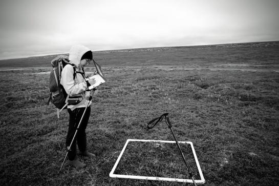 Vegetation picture collection fieldwork in Varanger peninsula (Photo: Lorena Munoz).